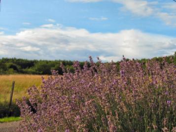 creatieve-vakantie-frankrijk-lavendel