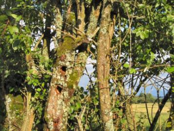 creatieve-vakantie-frankrijk-prachtige-bomen