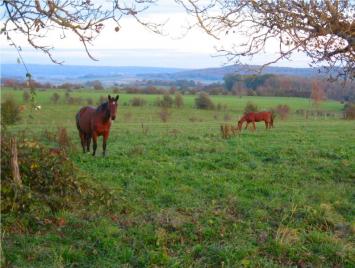 creatieve-vakantie-frankrijk-paarden-op-weiland