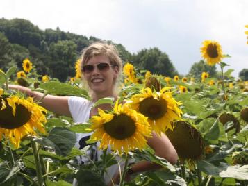 creatieve-vakantie-frankrijk-zonnebloemen