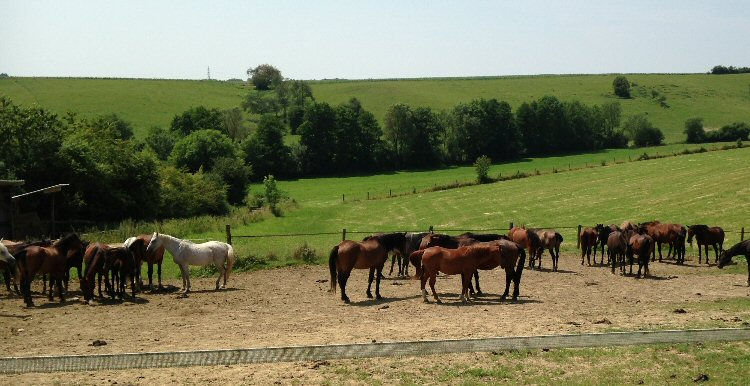 creatieve vakantie frankrijk paardjes