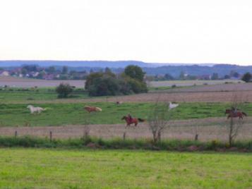 creatieve-vakantie-frankrijk-paarden