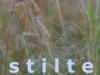 creatieve-vakantie-frankrijk-spinnenweb-met-dauwdruppels-stilte